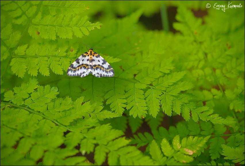 Бабочка на папоротнике