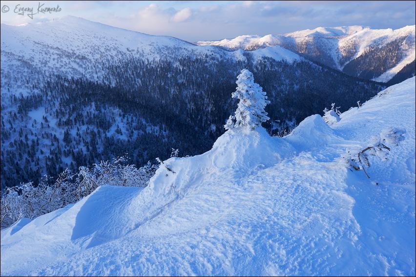 Запечатанная елочка на вершине горы Лысой