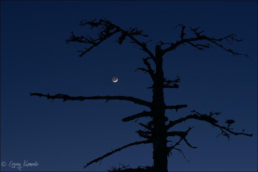 Молодая луна и мертвое дерево
