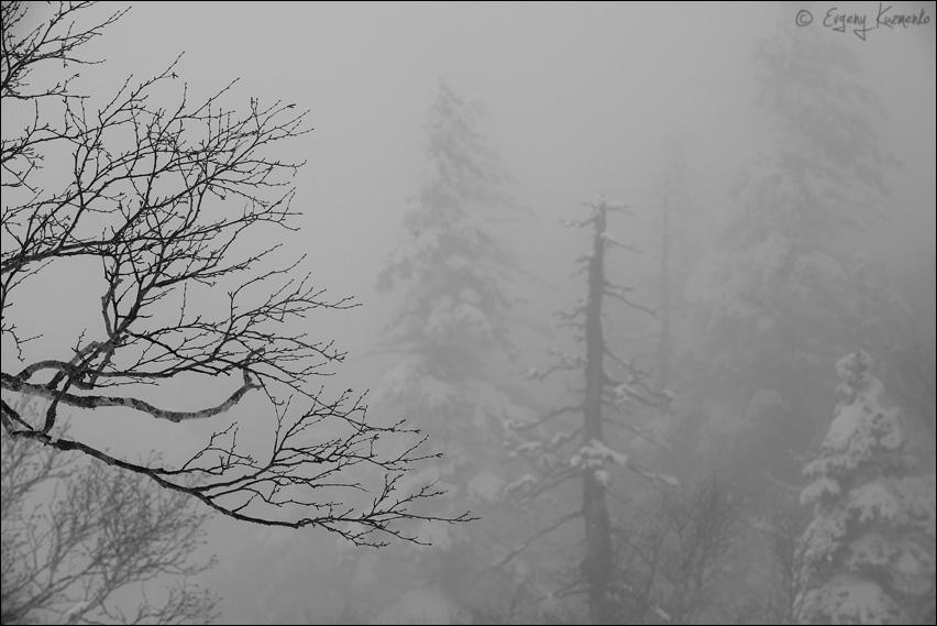 Туман в Зачарованном лесу