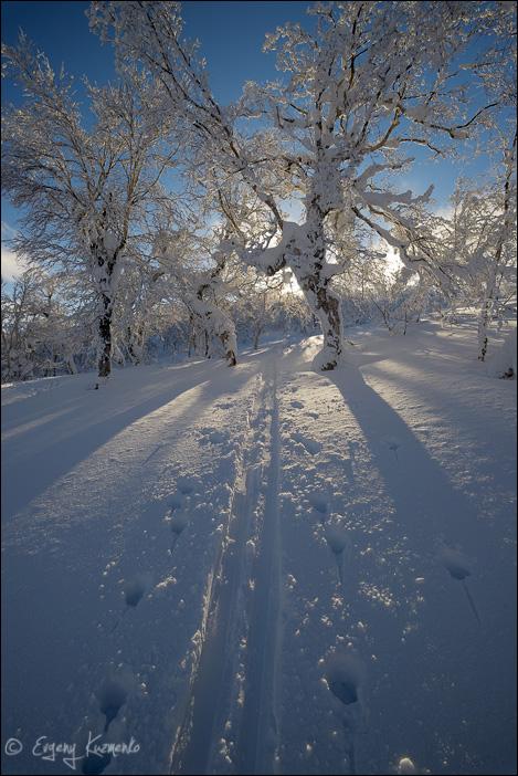 Лыжня уходит в заснеженный лес