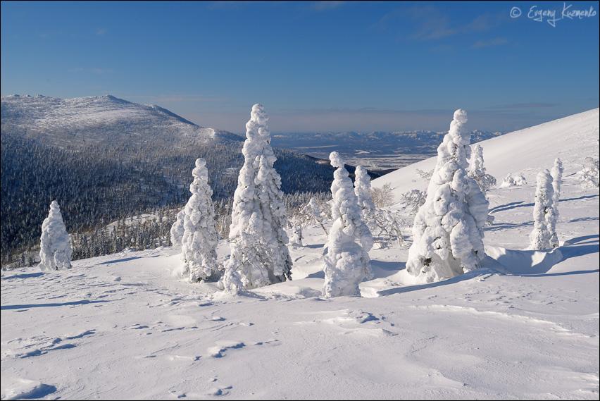 Заснеженные ели, на заднем плане - северо-восточный склон пика Чехова и Сусунайская долина
