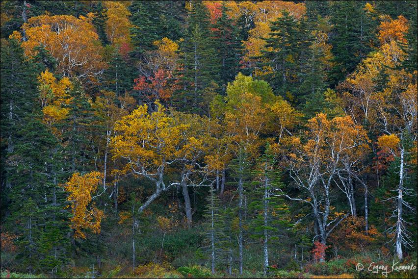 Осень на озере Моховое