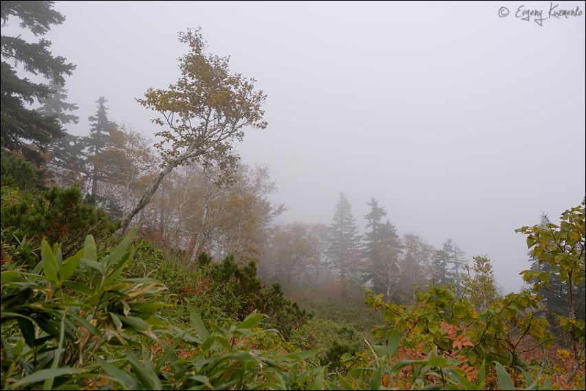 На Шпамберге туман