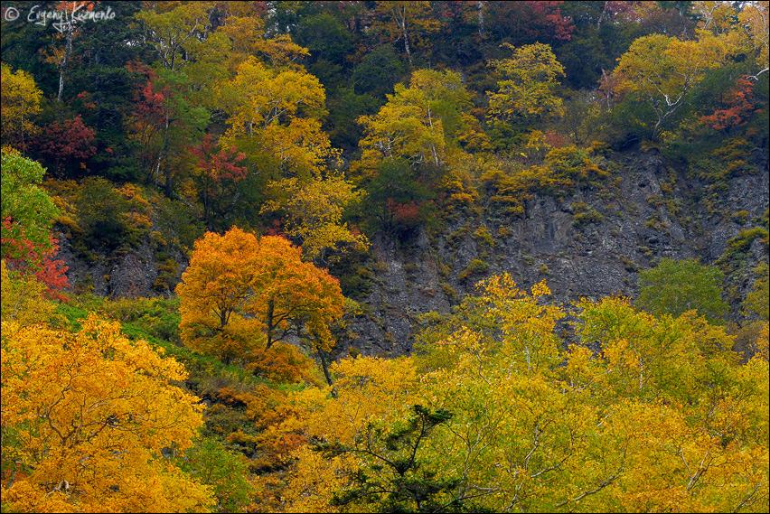 Осень, река Чеховка