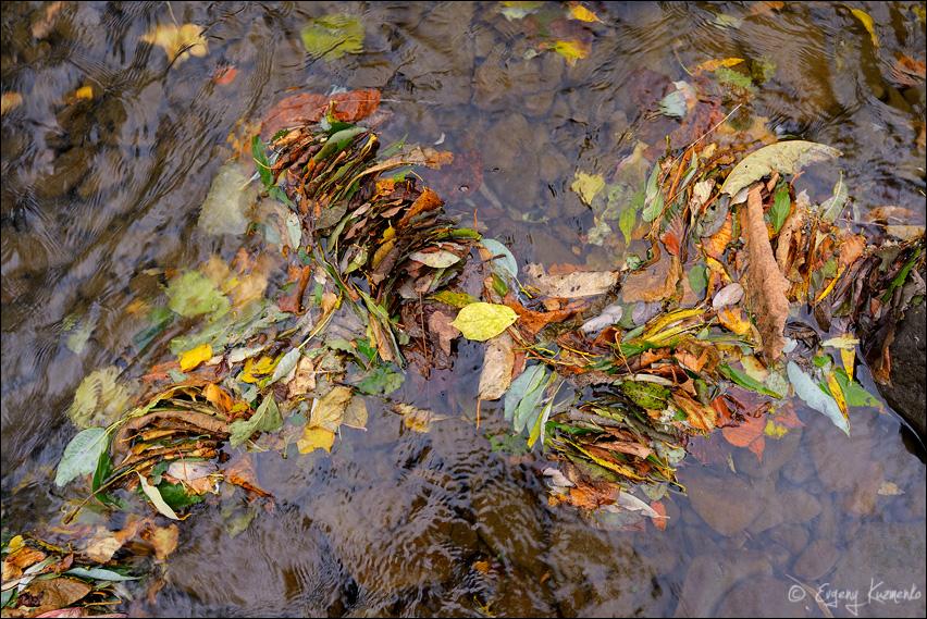 Осенние листья в реке