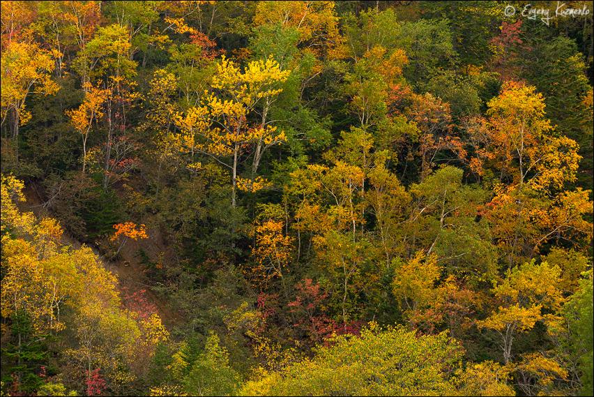 Сахалинская осень