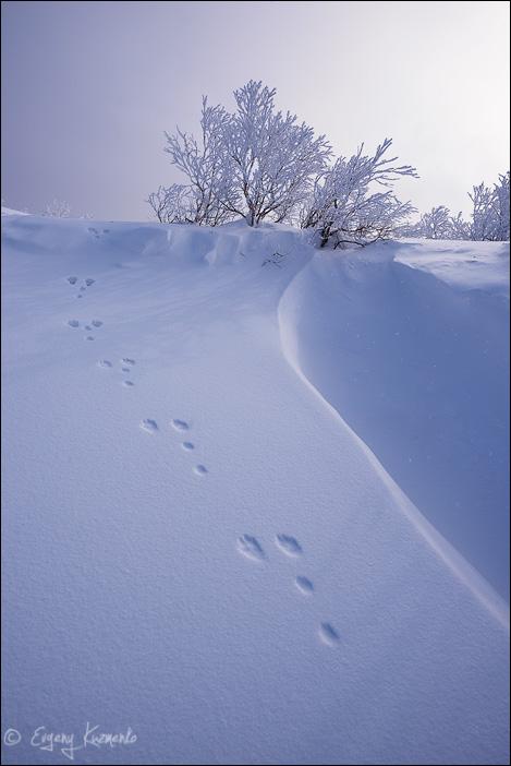 "Заячьи следы на снегу. Окрестности останца ""Бородавка"", Сахалин."