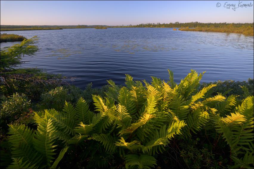 Тундровое озеро