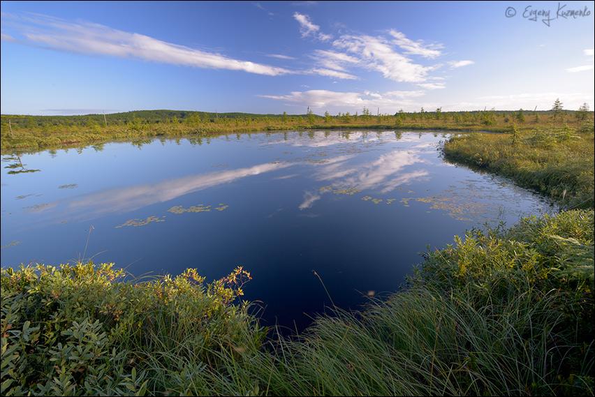 Озеро, на котором гнездилась пара краснозобых гагар