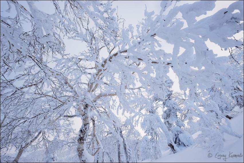 В северных распадках г. Пушкинской